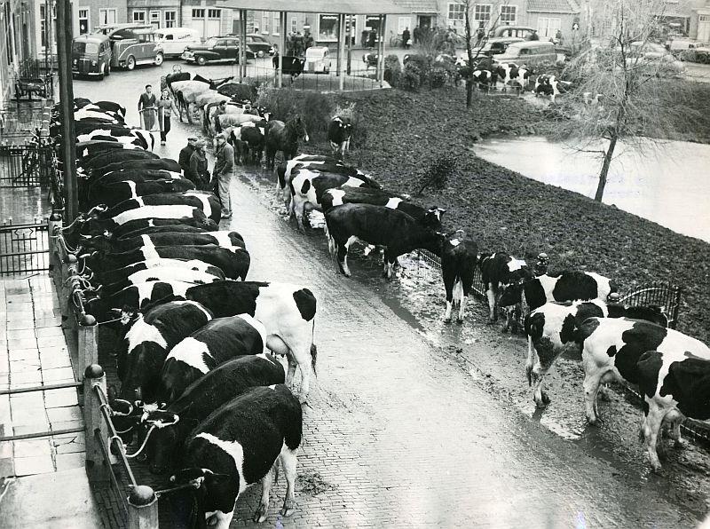 ENKELE HERINNERINGEN AAN DE WATERSNOODRAMP VAN 1953 IN ZUIDLAND
